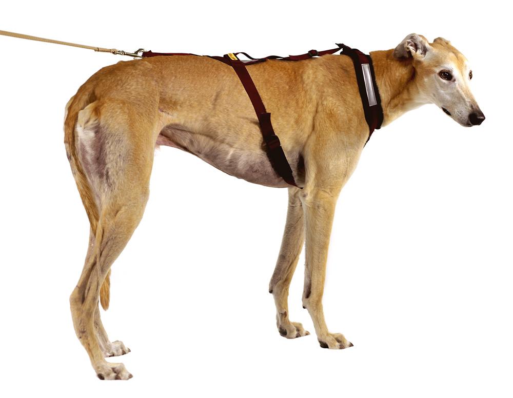 p 1897 dogbooties_SaddleBackHarness01 saddle back harness dog booties