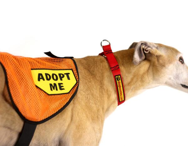"""""""Adopt Me"""" Vests"""